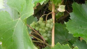 Baumschulträume mit Weinverkostung